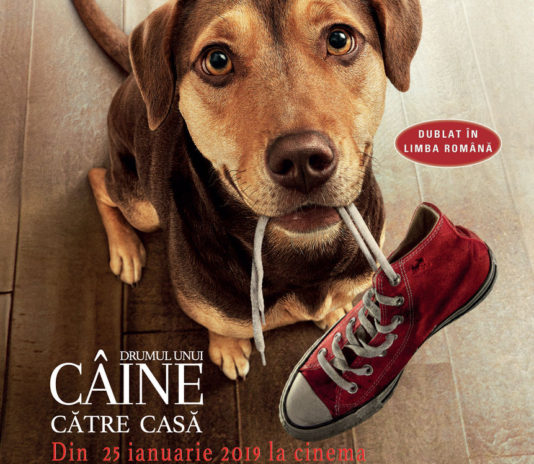 Poster Dumul unui câine către casă